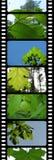 Drapeau de nature Image stock