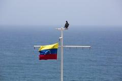 Drapeau de ondulation du Venezuela, l'oiseau et l'océan Photographie stock libre de droits
