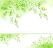 Drapeau de source de vecteur avec le feuillage vert Images libres de droits