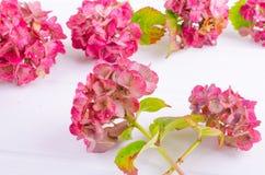 Drapeau des fleurs Background Image libre de droits