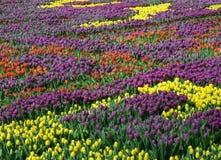 Drapeau des fleurs Background Photos libres de droits