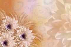 Drapeau des fleurs Background Chrysanthèmes blanc-jaunes de fleurs collage floral Fleurit la composition Images stock