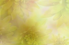 Drapeau des fleurs Background Chrysanthèmes jaunes de fleurs sur le fond brouillé collage floral Fleurit la composition Images stock