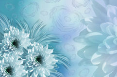 Drapeau des fleurs Background Fleurit des chrysanthèmes de blanc-turquoise collage floral Fleurit la composition Photos libres de droits