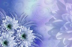 Drapeau des fleurs Background Fleurit les chrysanthèmes blanc-bleus collage floral Fleurit la composition Image stock