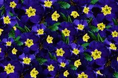 Drapeau des fleurs Background Fleurit les violettes bleues Beaucoup violettes avec un centre jaune collage floral Fleurit la comp Image stock