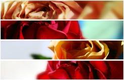 Drapeau - quatre roses normales Image stock
