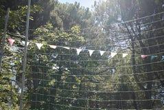 Drapeaux à la lumière du soleil Photo libre de droits