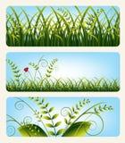 Drapeaux avec l'herbe Photos stock