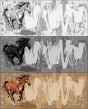 Drapeaux avec le cheval courant sur le bacground grunge Images libres de droits