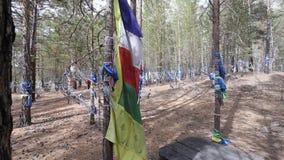 Drapeaux bouddhistes sacrés dans le vent banque de vidéos