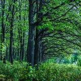 Drapeaux de chêne Images libres de droits