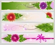 Drapeaux floraux de maille réglés Photographie stock libre de droits