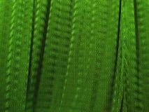 draperar silk Royaltyfria Bilder