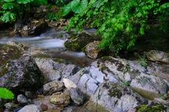Draperende kreek door de wildernis Stock Foto