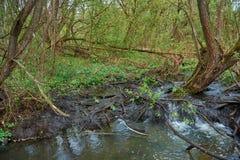 Draperende rivier met mooie rivierdrempels in het bos stock foto