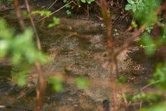 Draperende rivier met mooie rivierdrempels in het bos royalty-vrije stock afbeeldingen