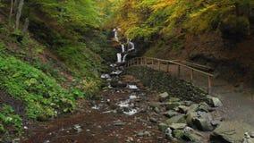 Draperende waterval in het bos Nationale park ukraine stock videobeelden