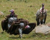 Drapieżników ptaki siedzą na ziemi Kenja Tanzania Obrazy Royalty Free