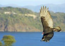 drapieżny ptak Fotografia Royalty Free
