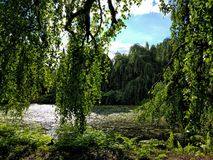 Drapping-Bäume über Moos bedeckten See Lizenzfreies Stockbild