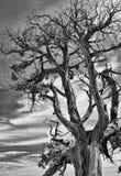 Drastische Abbildung eines toten Baums. Lizenzfreie Stockfotografie