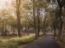 Drastische Asphaltwegweise im allgemeinen Park des Fallherbstes mit warmem Licht für Hintergrund, entspannen sich oder neuer Konz stockbild