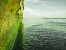 Drastische Küstenklippe und Seemöwen Lizenzfreies Stockfoto