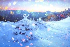 Drastische winterliche Szene mit schneebedeckten Bäumen stockfotografie