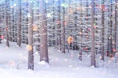 Drastische winterliche Szene mit schneebedeckten Bäumen lizenzfreies stockfoto