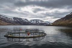 Drastische Wolken über Sudureyri-Fischfarm in Sugandafjordur Westfjords Island Stockfoto