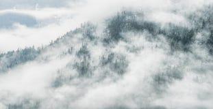 Drastische Wolken-Fell-Waldansicht Stockfotos