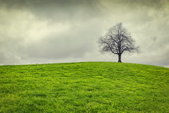 Drastischer Himmel über altem einsamem Baum Stockbilder