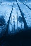 Drastischer Himmel über dem Wald Stockfoto