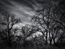 Drastischer Himmel über Pappel-Stand Stockfotografie