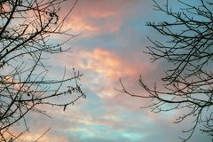Drastischer Himmel bei Sonnenuntergang im Wald Stockfoto