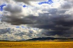 Drastischer Himmel über gelber Steppe Stockfoto