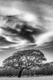 Drastischer Himmel und Baum Lizenzfreies Stockbild