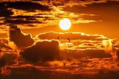 Drastischer orange goldener Sonnenunterganghimmel mit Sonnenscheibe unter dem Fliegen der Wolken und zwei Seemöwen Schöne Landsch stockbilder