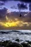 Drastischer Sonnenaufgang über dem Meer mit Fliegenfalken - Gouves, Kreta Lizenzfreies Stockbild