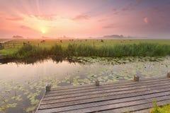 Drastischer Sonnenaufgang über Fluss mit Pier und Vieh auf Weide Stockbild