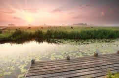 Drastischer Sonnenaufgang über Kuhweide und -fluß Lizenzfreie Stockbilder