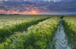 Drastischer Sonnenuntergang über Weizengetreidefeld lizenzfreies stockbild