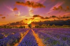 Drastischer Sonnenuntergang auf einem Lavendelfeld Häuser und Bäume auf dem hor lizenzfreie stockfotos