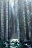 Drastischer Wald in Österreich lizenzfreies stockfoto
