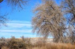 Drastischer Winter-Himmel über dem Pappelwald am See-Pueblo-Nationalpark Lizenzfreies Stockbild