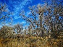 Drastischer Winter-Himmel über dem Pappelwald am See-Pueblo-Nationalpark Stockfoto