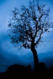 Drastisches Baumschattenbild gegen dunklen schwermütigen Himmel Stockfoto