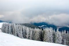 Drastisches Holz in den Bergen nach Schneefällen Stockfotos