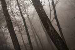 Drastisches Waldland an der Dämmerung Lizenzfreie Stockfotografie